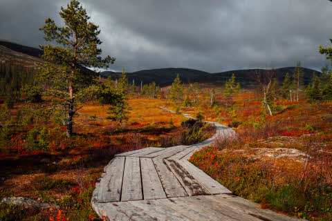 lapland-autumn-colors.jpg